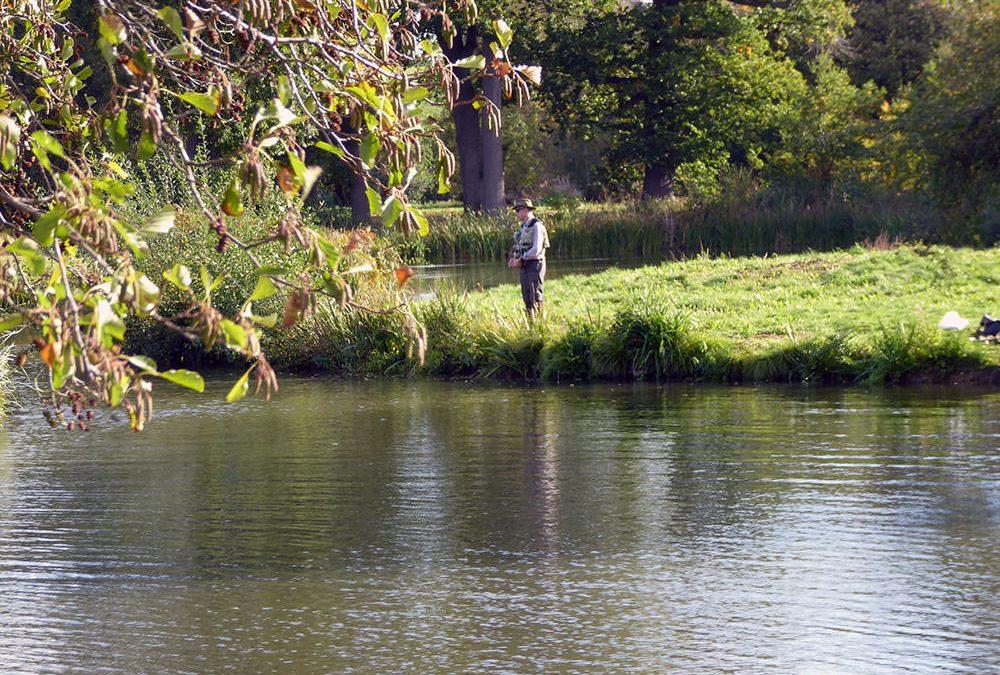The Penshurst Park Fishery open day