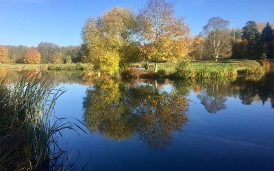 Penshurst fly fishing Catch Report November 2018