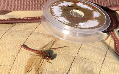 Penshurst Fly fishing Catch Report October 2019