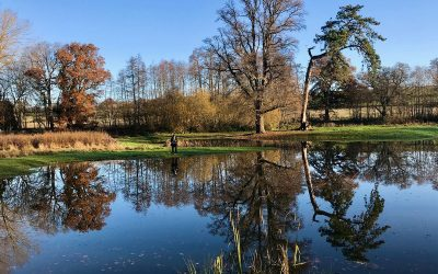 Penshurst Fly fishing Catch Report December 2019