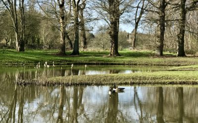 Penshurst fly fishing catch report – February 2020