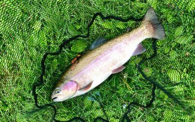 Penshurst fly fishing news & report – September 2020